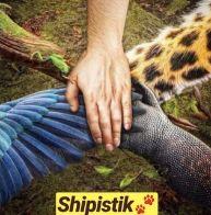 Shipistik