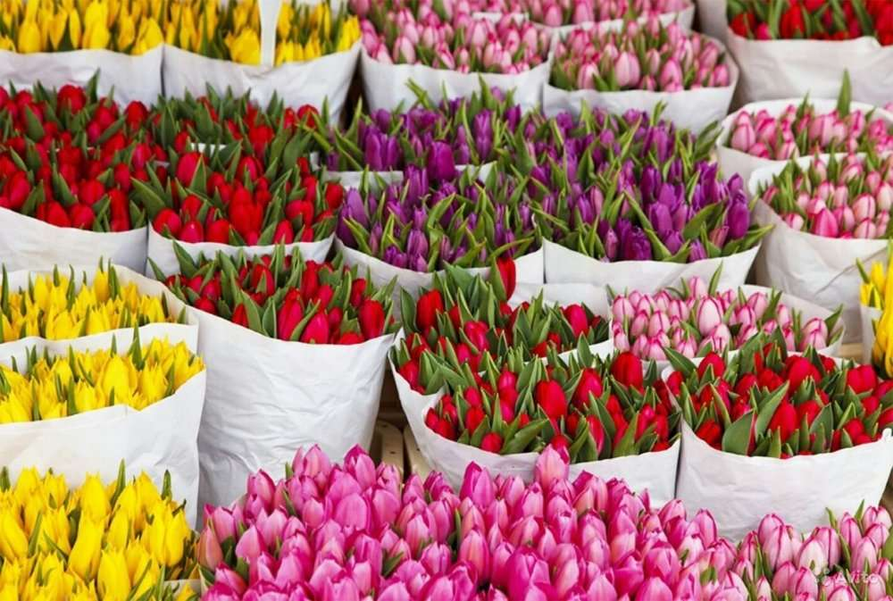 фото тюльпаны краснодар знают, что