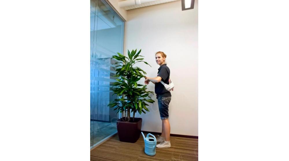 Профессиональный уход за растениями, ежемесячное обслуживание растений