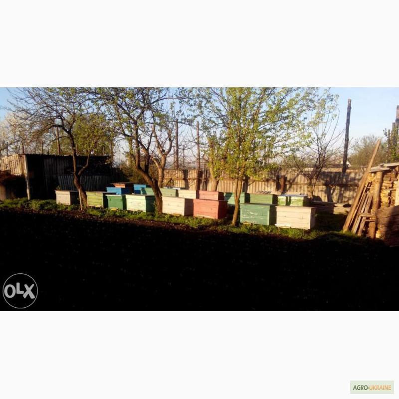 Продаются пчелопакеты