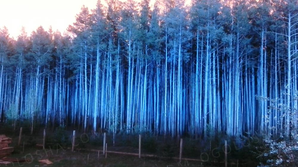 Продам дачный участок возле леса 7 соток под Киевом