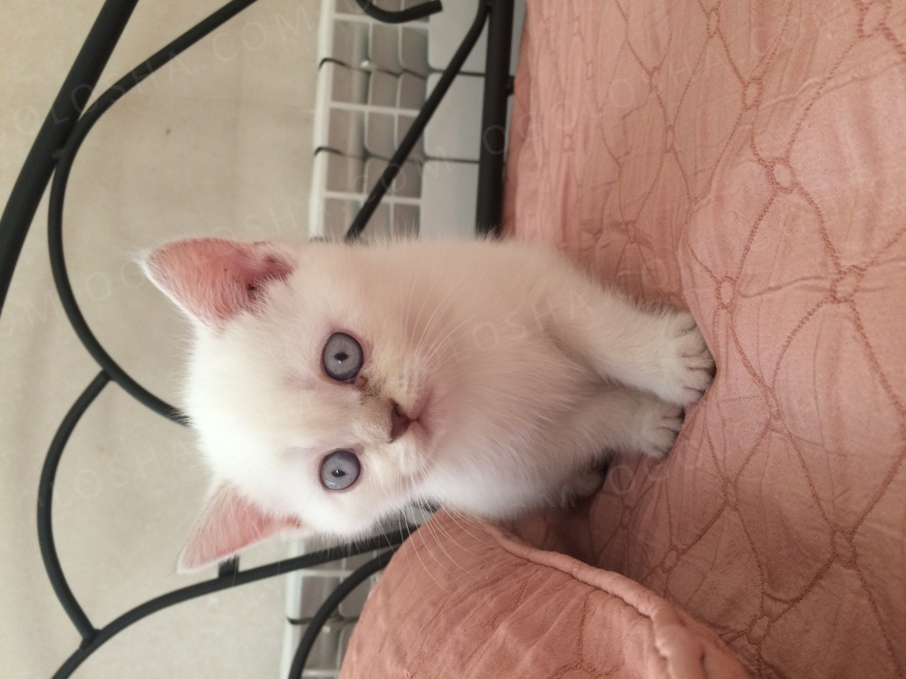 Продам котика недорого!!!