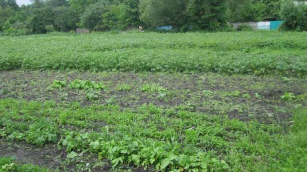 Земельный участок в с.Вишеньки, Бориспольский район, Киевская область