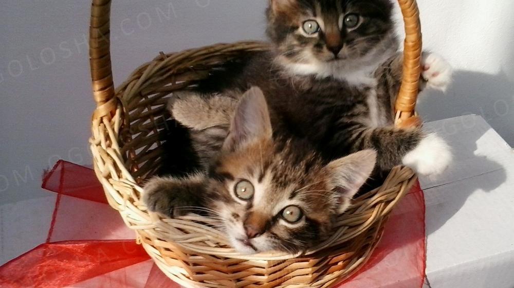 Отдам замечательных котят