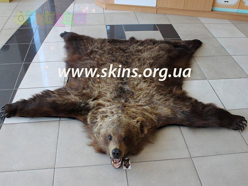 Шкура бурого медведя, подарок