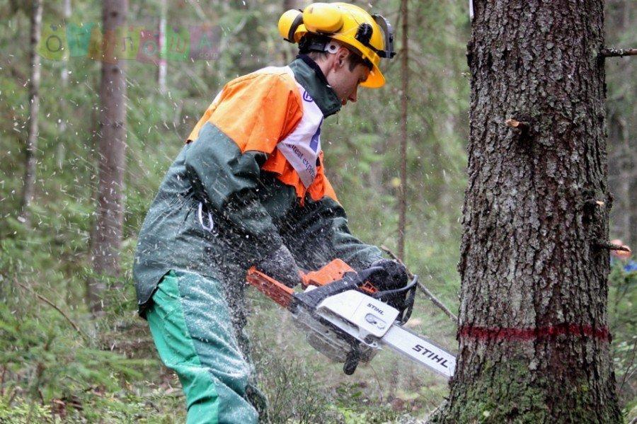 Требуются работники на лесоповал, Польша