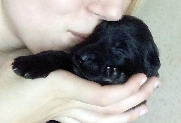 Маленькие черненькие ищут хозяев чтобы любить, беречь и охранять ;)