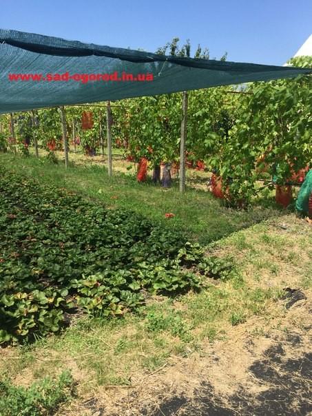 Затеняющая сетка 45% в рулонах и любой метраж ширина 2м и 4м