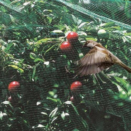 Сетка от птиц (4м*100м) защитная на деревья