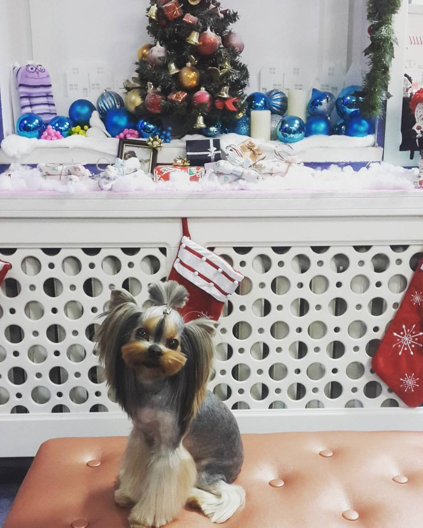 Стрижка собак в зоосалоне Dog-Style Киев, Позняки