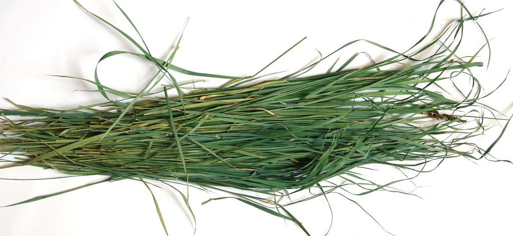 Сушеная трава зубровка - Hierochloe odorata