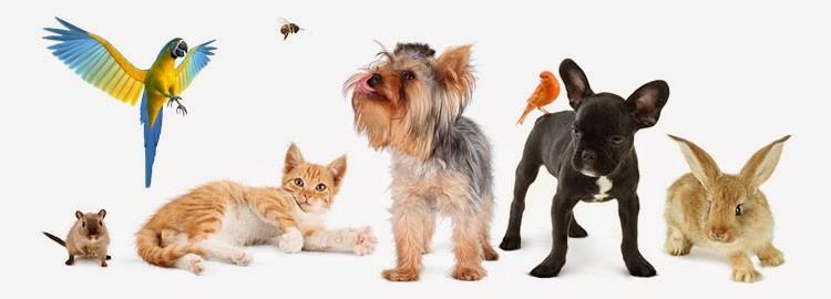 Кастрация, стерилизация, ветеринарная помощь, вызов вет. врача на дом