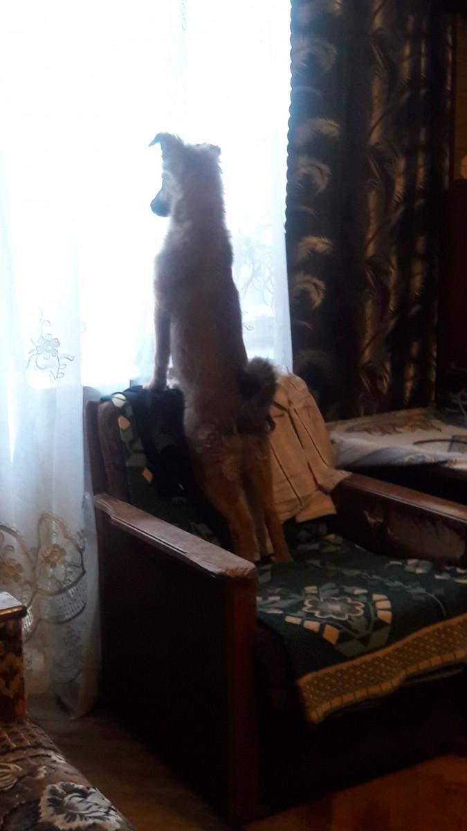 Отдам в добрые рукипруки подрощеного щенка Басскской овчарки