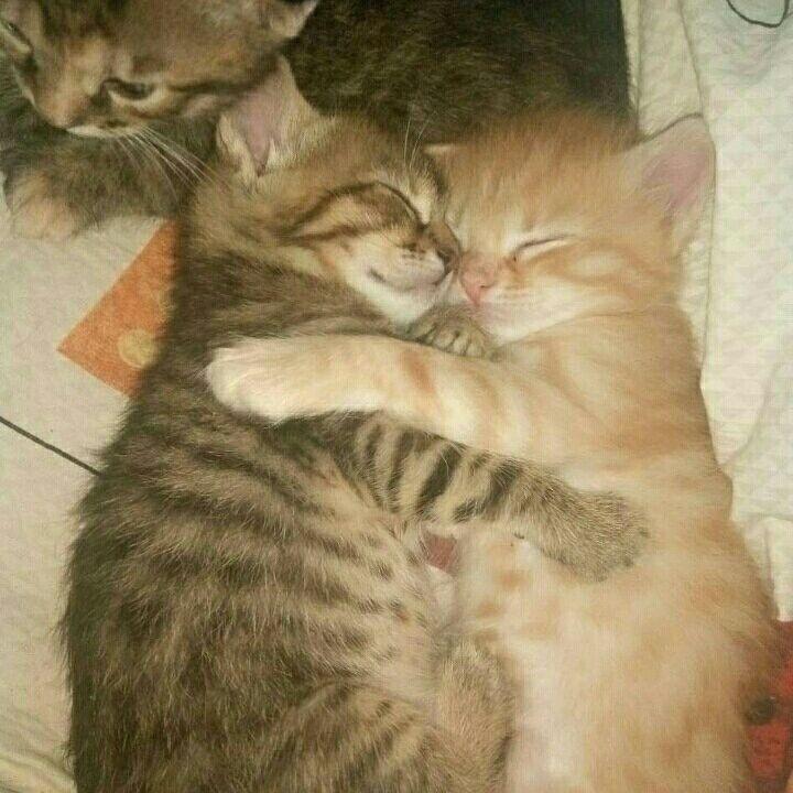 Трое котят, 3х месяцев ищут дом, БЕСПЛАТНО