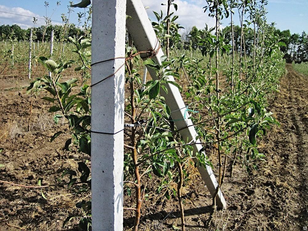 Стовпчики/столбики виноградні від виробника по доступній ціні