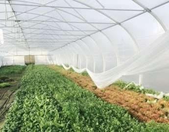 Новое тепличное хозяйство Киевская область