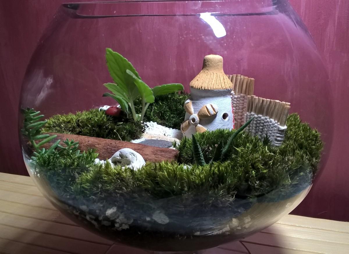 рослинні композиції, флораріуми