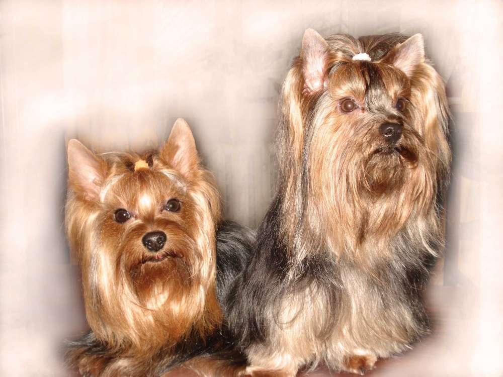 Стрижка собак в Днепре