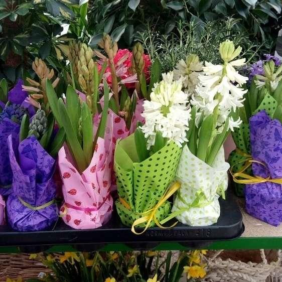 Цветы на подарок  на 8 марта