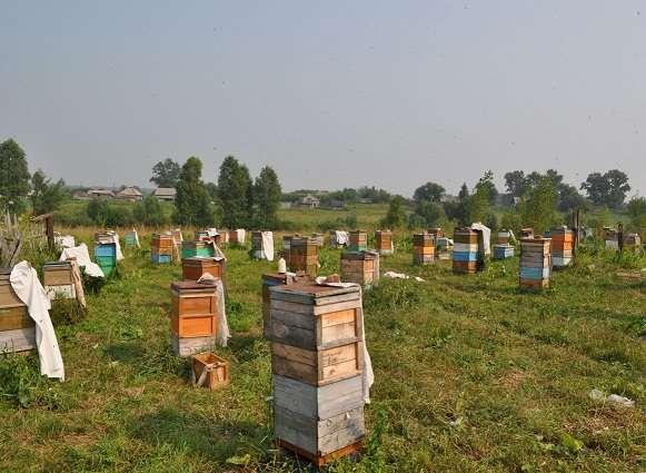 Пасека, пчелы, пчелосемьи, пасіка, бджоли, бджолосім'ї