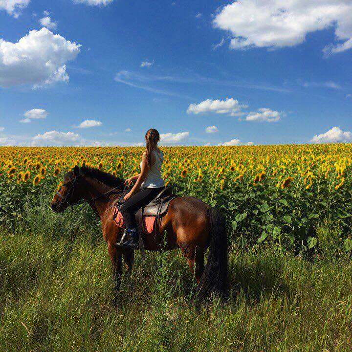 Конные прогулки Харьков, прокат лошадей, прогулки верхом