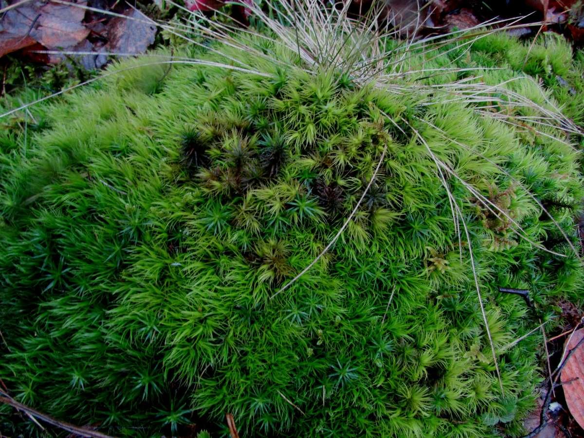 Продам природный мох