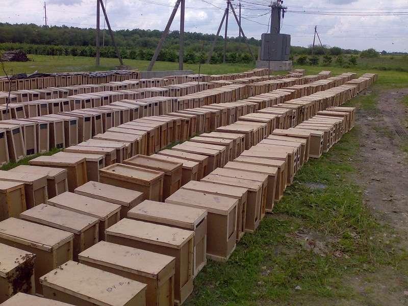 Пчелопакеты КАРПАТКА 4 рамки 3+1 САМОВЫВОЗ.