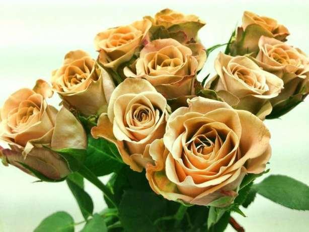 Цветы оптом, Комнатные, Флористика из Голландии, Азии, Кении, Эквадора