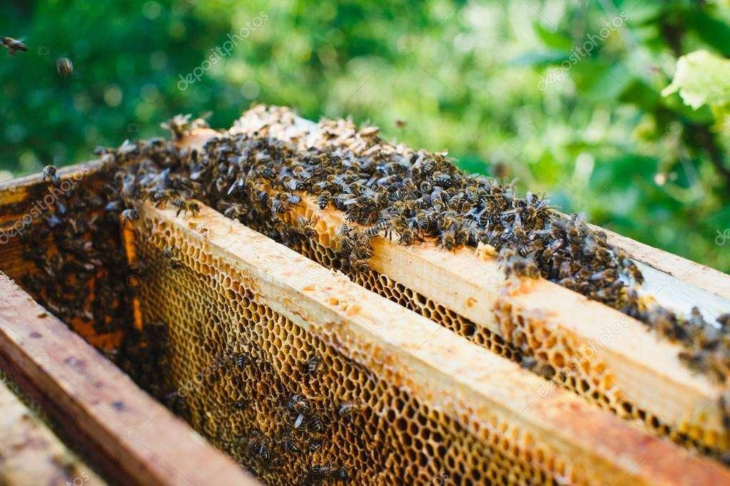 Продам пчелосемьи с ульями и без