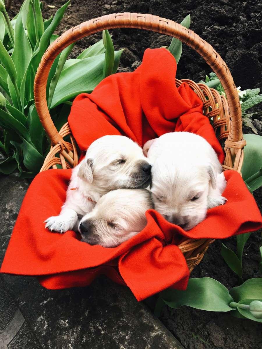 Забронюй своє щастя у рік золотої собаки!