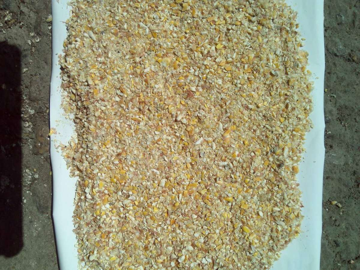 Продам Битая кукуруза, крупка, сечка, корм для птицы