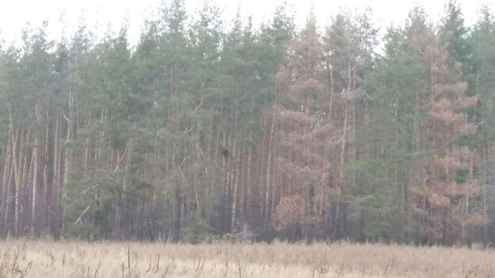 Продам земельный участок Киевская обл., Бородянский р-н, с. Язвинка