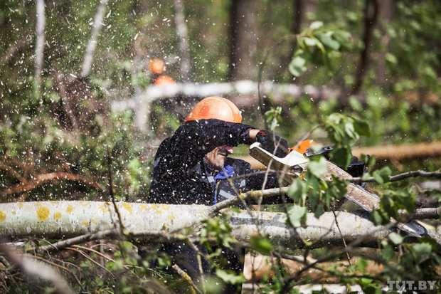 Работник, сотрудник лесного хозяйства. Работа в Эстонии, Финляндии.