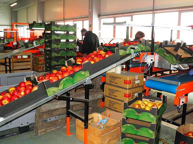 Работа на фабрике в Варшаве сортировка овощей
