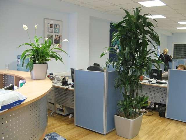 Уход за растениями в офисе и дома