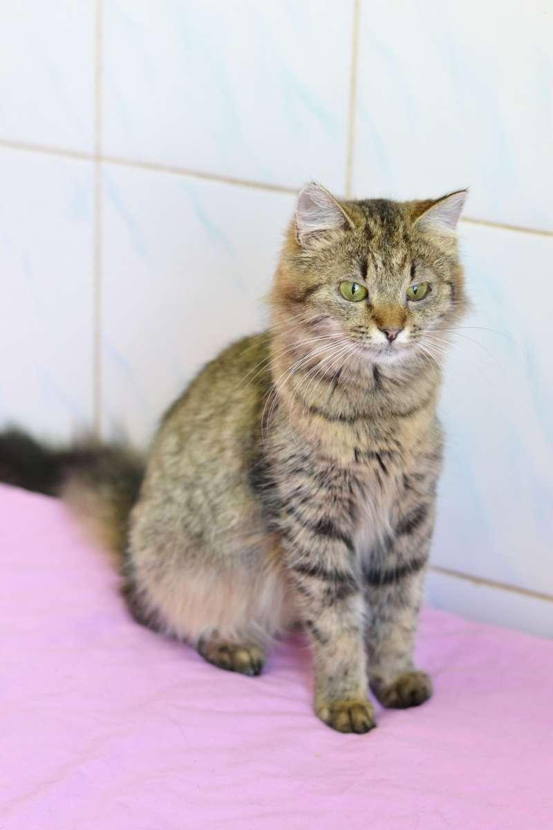 Кошечка Виолетта 5 месяцев ищет семью!