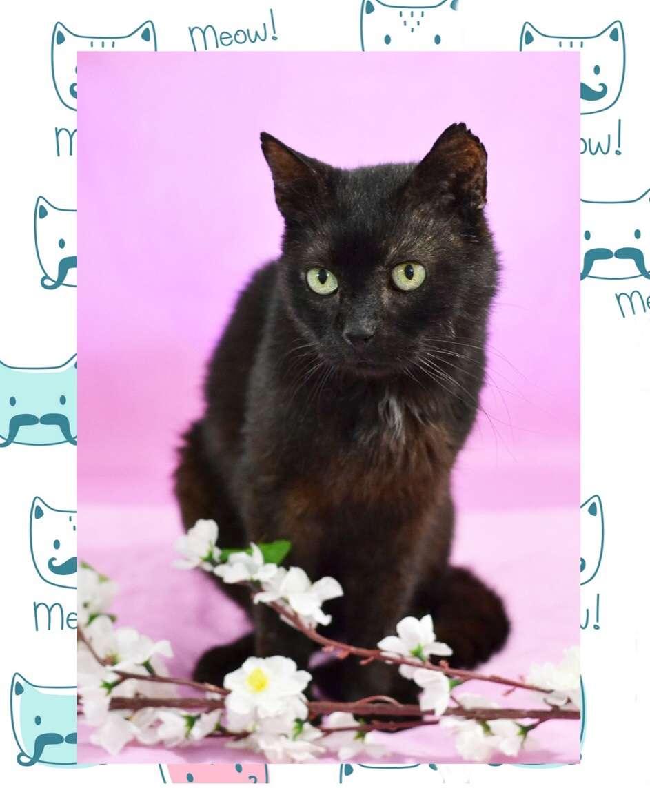 Черный кот Сильвестр, 8 лет, самый добрый кот в мире