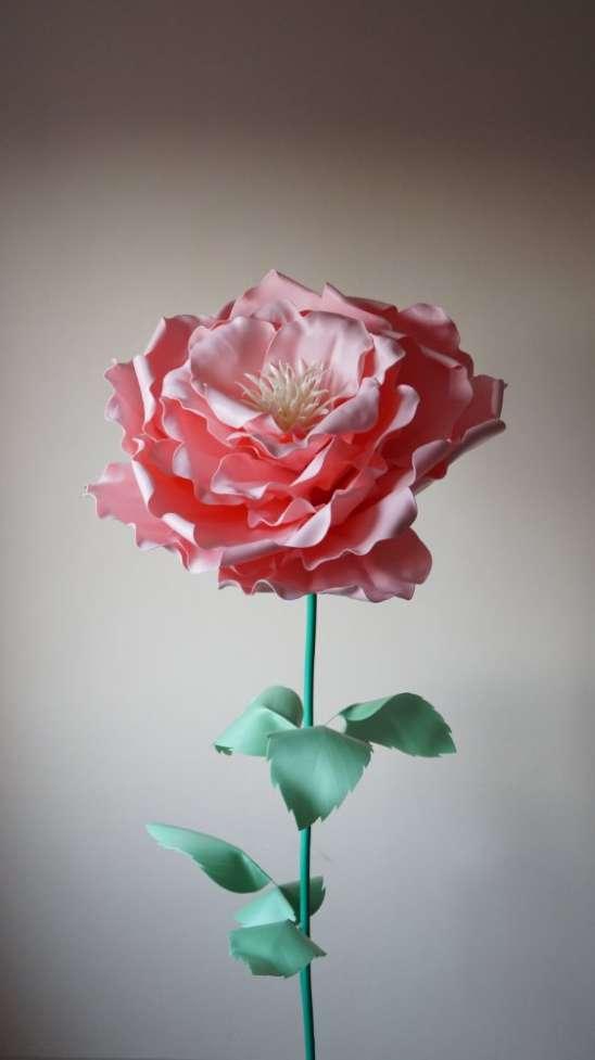 Пионовидная роза с изолона (ростовые цветы)