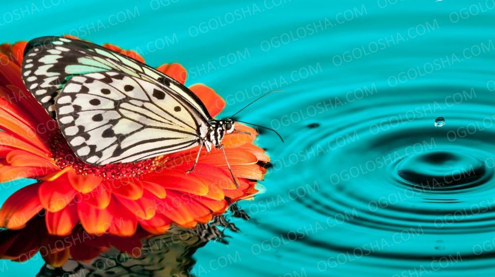 Живые бабочки для подарка на свадьбу