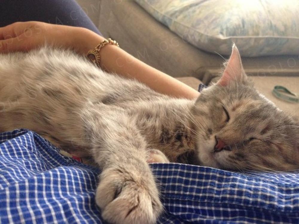Ищет дом супер энергичный кото-цветочек Жасмин