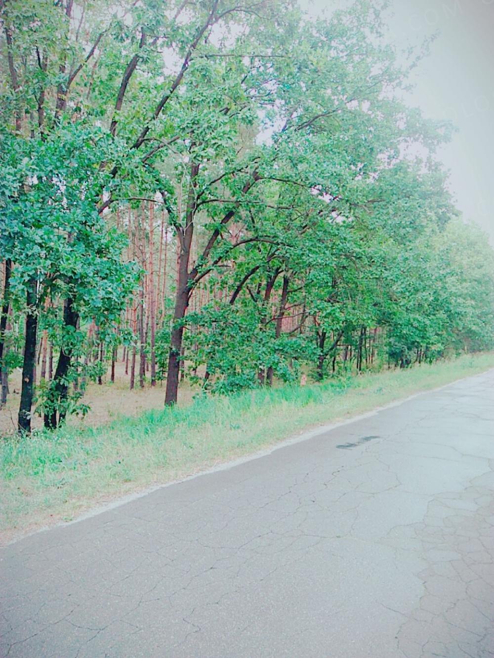 1 линия канал в с Лебедёвка.Вышгородское направление участок 12.5 сот цена 25 тыс уе.