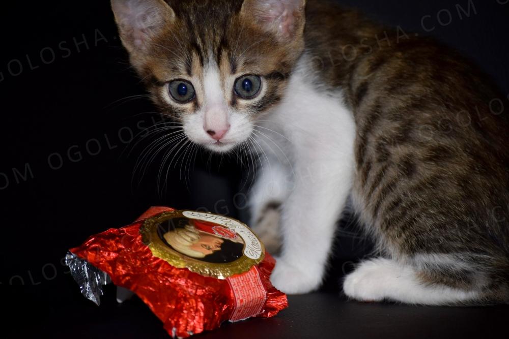 Невероятный котенок Рембо ищет семью!