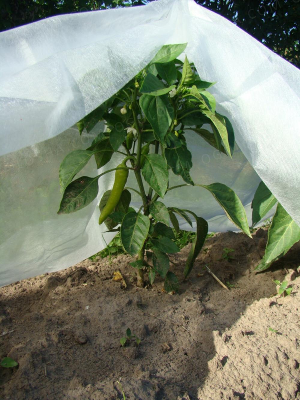 Агроволокно Агротекс 60 г/м² (1,6м*10м), защита от морозов