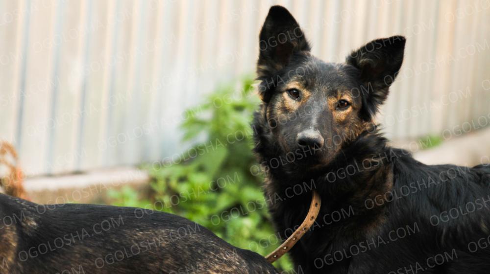 Замечательный пес Джейк в поисках любящей семьи