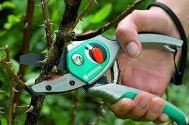 Обрезка деревьев . Услуги садовника. Обрезка сада