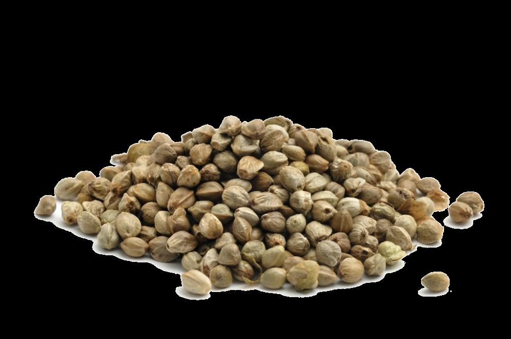 Как выглядит семена конопли общий анализ крови и марихуана