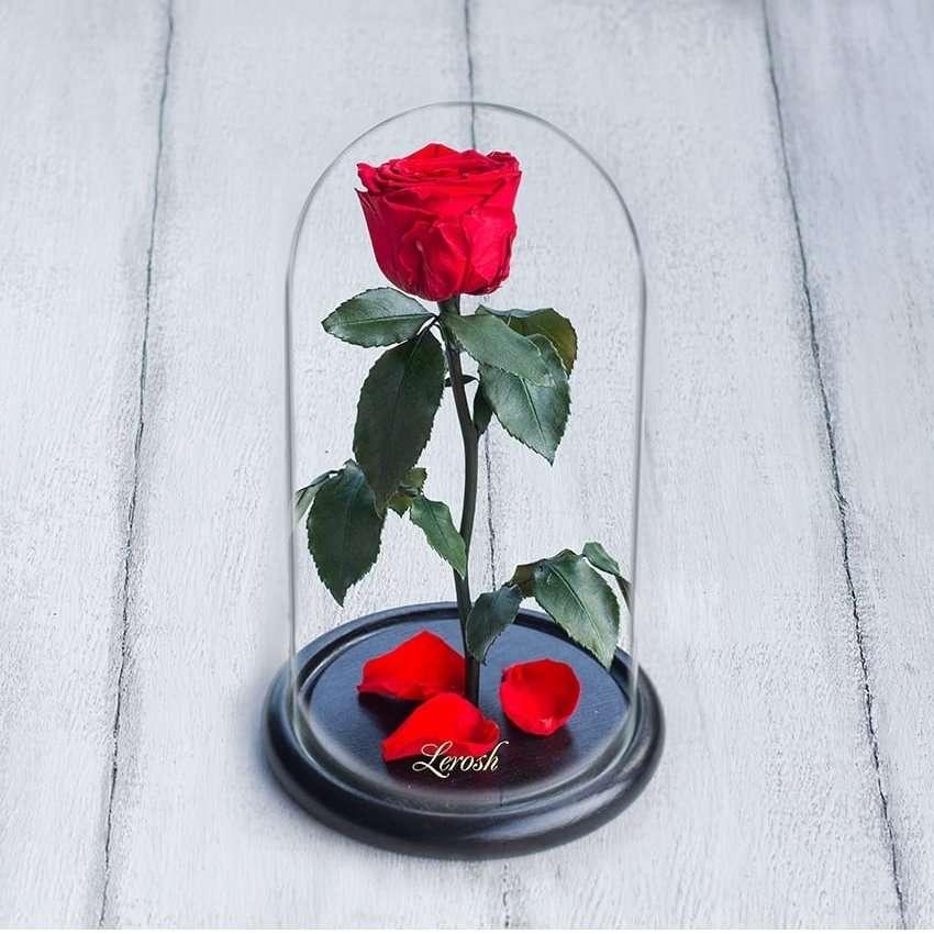 Стабилизированная роза в колбе Lerosh - Mini 27 см,
