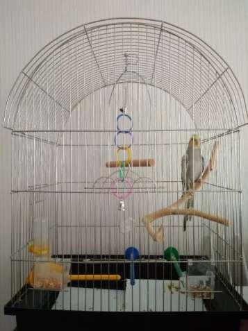 Папуга Корелла (4 місяці) із кліткою