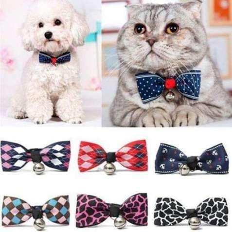 Одежда, аксесуары, амуниция для собак и котов.