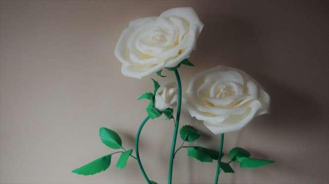 Роза белая (ростовые цветы)